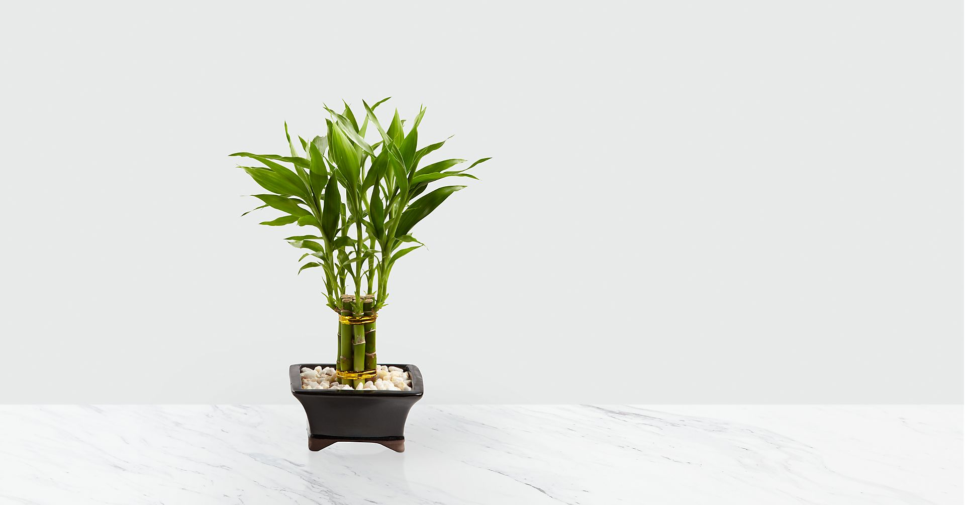 Lucky Bamboo How To Take Care Of This Lucky Plant How To Garden Advice