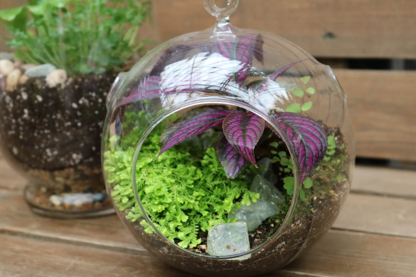 How To Create A Terrarium Best Terrarium Plants To Choose How To Garden Advice
